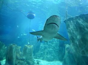 Blogs: Bilde ar haizivi, pelde Marmora jūrā, no Ķīnas par Slovēniju