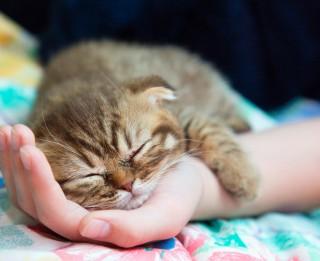 Latvijas izplatītākais un populārākais mājdzīvnieks - kaķis