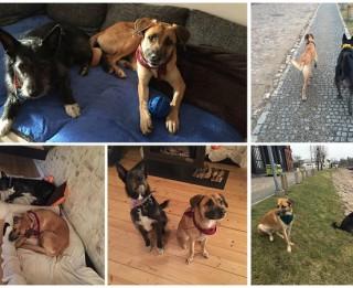 Spārkijs + Mikija = laimīgais suņa un cilvēka stāsts!