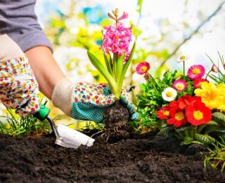Klāt dārza darbu sezona – kā izveidot skaistu un funkcionālu dārzu?
