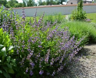 Livonijas pils aicina uz Vēsturisko parku un dārzu dienām 2020