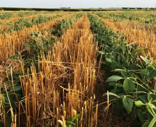 Atbalsts lauksaimniekiem tehnikas, izejmateriālu iegādei un citām vajadzībām