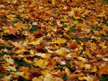 Novembris- lielisks mēnesis stādīšanai. Dārza darbi novembrī