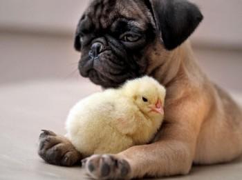Svarīgākie ieteikumi, kas jāņem vērā, iegādājoties suni
