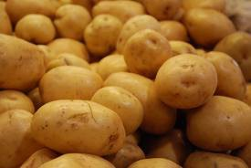 Katrs ceturtais Rīgas skolēns nezina, ka kartupeļi aug zem zemes