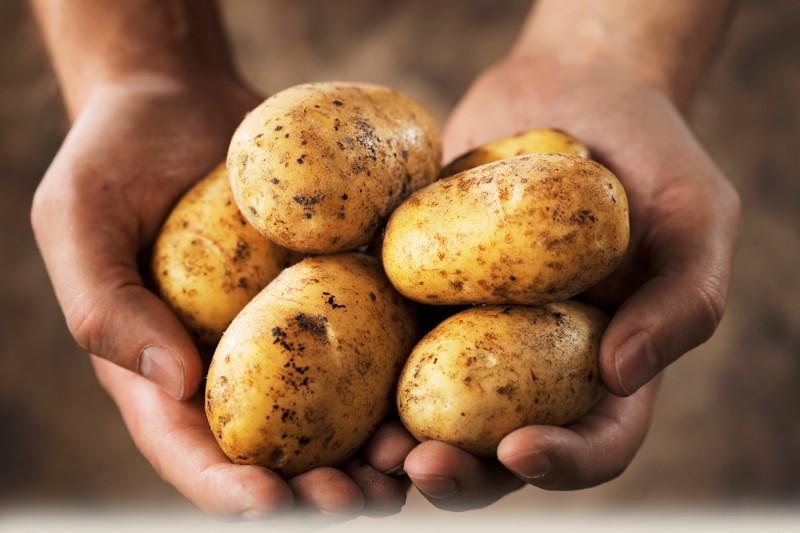 Ko Tu zini par kartupeli?