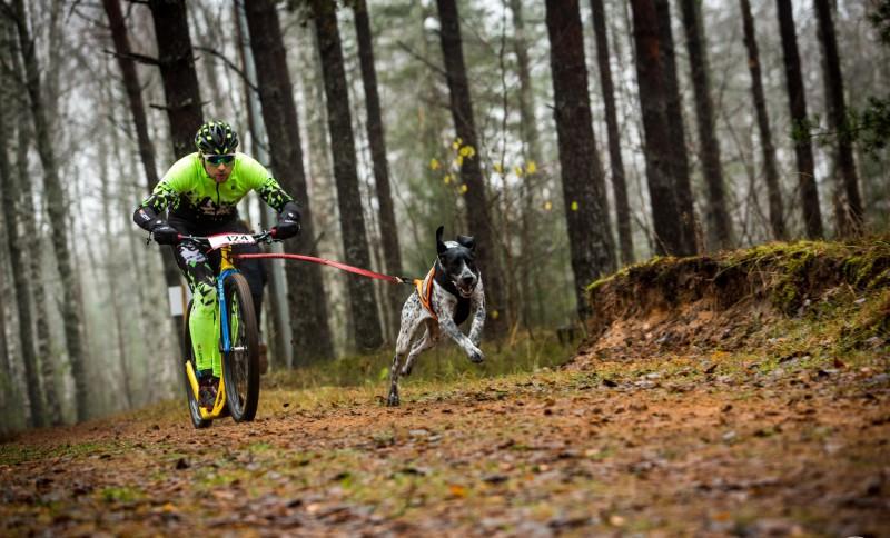Mūsu sportistiem panākumi Pasaules kausa posmā kamanu suņu sportā Ikšķilē
