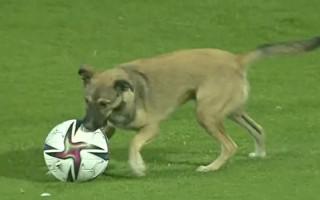 Video: Suns iesaistās pirms starta un dodas laukumā arī spēles laikā