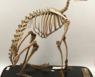 """Dabas muzejā vēl nebijusi izstāde """"Skat - logā skelets!"""""""