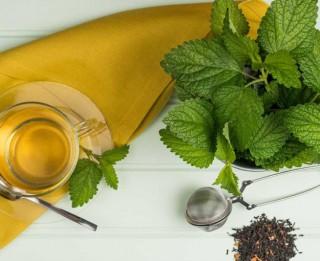 Latvijas 7 svaigo zāļu tēju īpašības un raksturojums